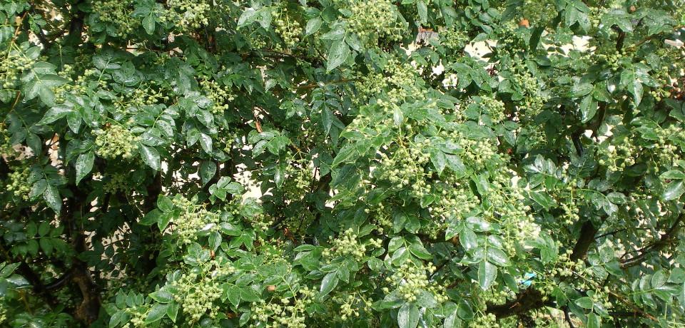 Plantes tropicales et à épices